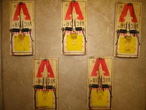 5 rat traps rental Austin, TX