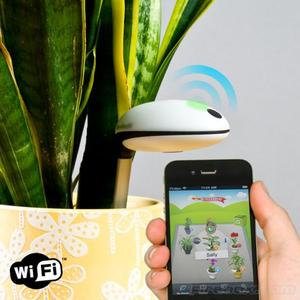 Koubachi Wi-Fi Outdoor Plant Sensor rental Chicago, IL
