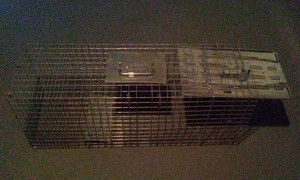 Large 1-Door Live Animal Trap rental Columbus, OH